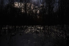 Moonrise over the snowy woods