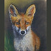 Fox in pastel, looking on my old cds of paintings by lakeslover2010