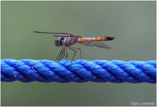 35-mosquito