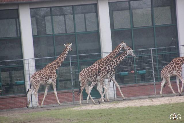 Besuch Tierpark Friedrichsfelde 14.02.201662