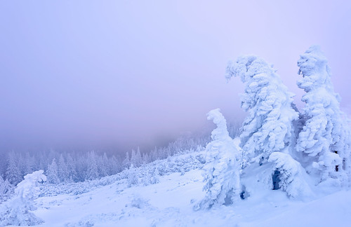 morning pink trees winter light white mountain snow cold tree nature sunrise landscape nikon scenery europe natural outdoor romania winterscape neamt 1635mm ceahlau d810 outstandingromanianphotographers