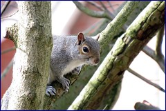 310316 Cheeky Squirrel