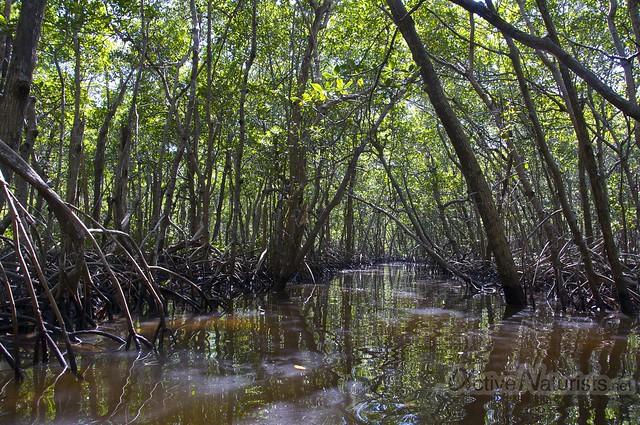 view 0002 Everglades, Florida, USA
