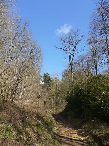 Lidcombe Woods