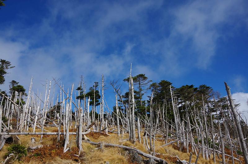 20141123-大峰山八経ヶ岳(Saku)-0037.jpg