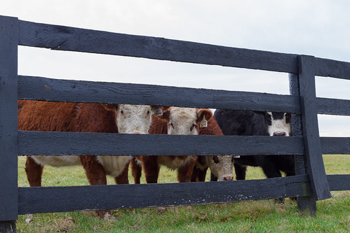 My new friends near Woodford Reserve Distillery in Versailles, KY