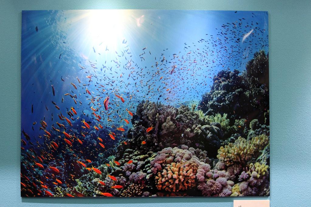 IMG_1492_金獎_陽光底下的珊瑚礁