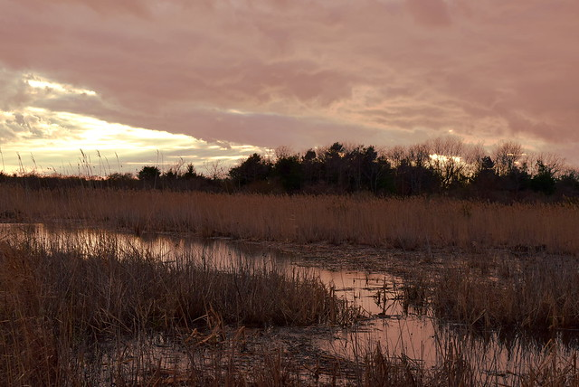Twilight in the marshes