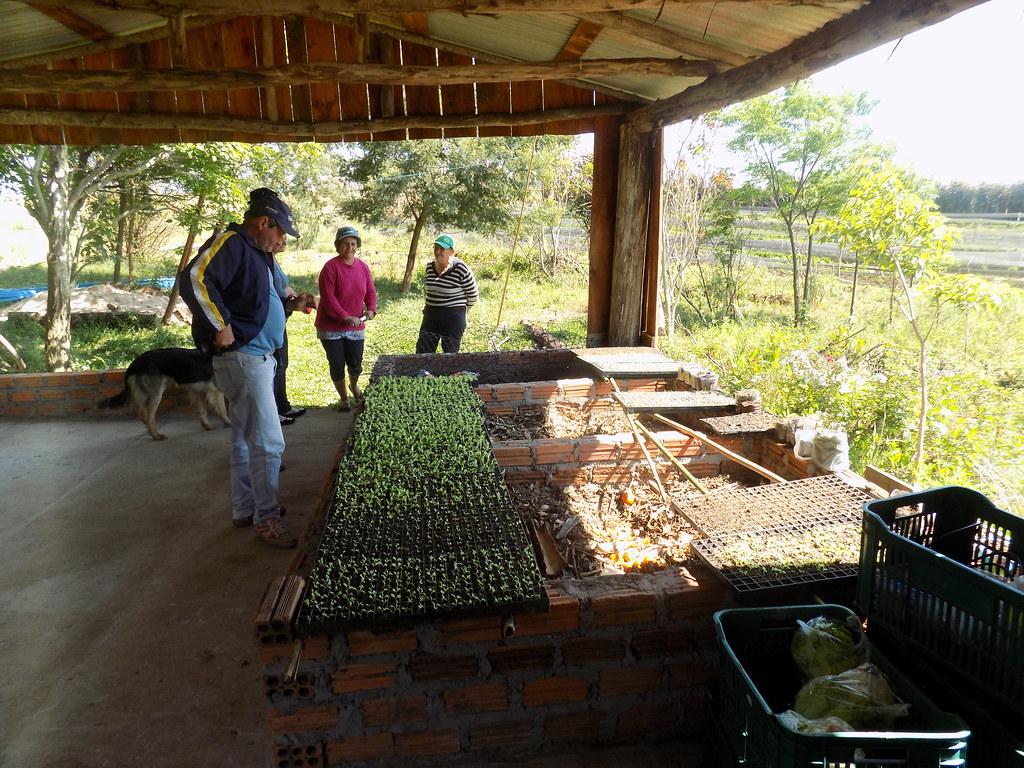 RS: Na capital da soja, assentados driblam uso de agrotóxicos e investem na produção orgânica