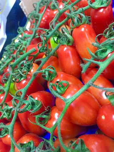 san marzanino tomat