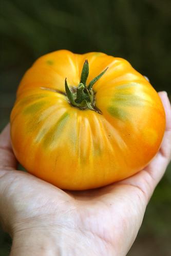 Tomato big white pink stripe