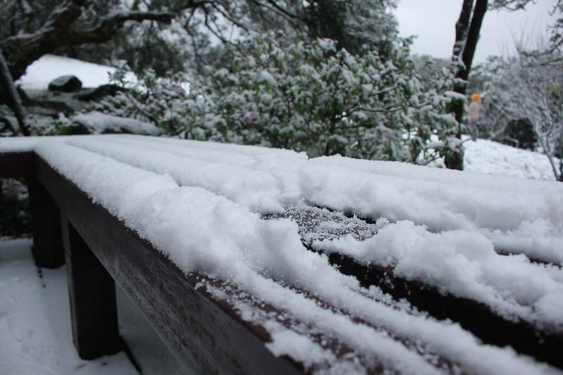 2016-台北陽明山-瑞雪-難得一見的雪白山景-17度C隨拍 (58)