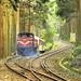 Taiwan, Chiayi County, Alishan Forest Railway,  National Scenic Area