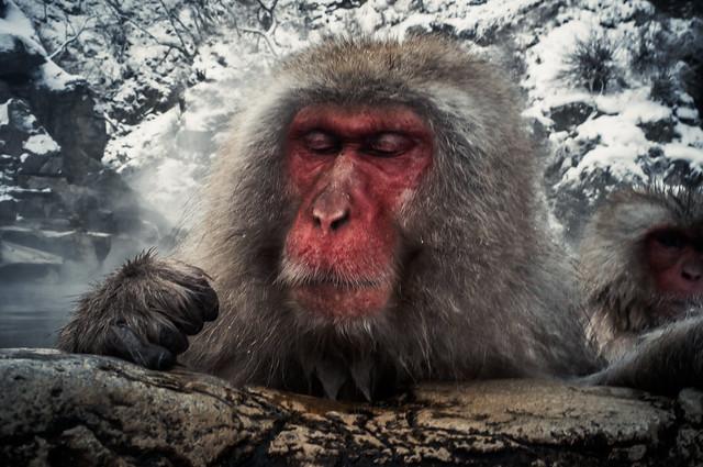 Humming Monkey