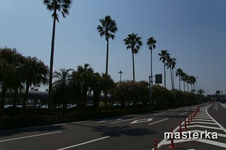 宮崎空港の木