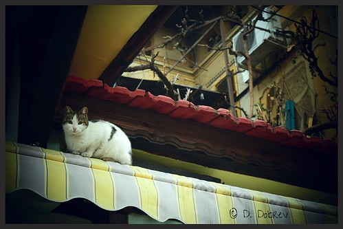 old roof urban cats house animal architecture cat photography nikon kitten cloudy outdoor details kitty vignette d3300