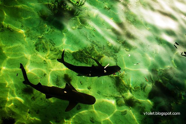 Nusa Karamba Ikan4-2279rw