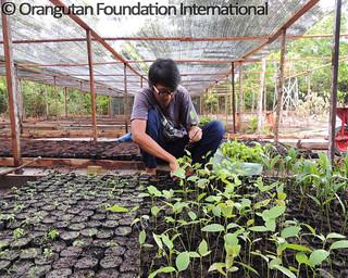 2016-03-04_Herbarium nursery_Pak Harits_MHP_wm