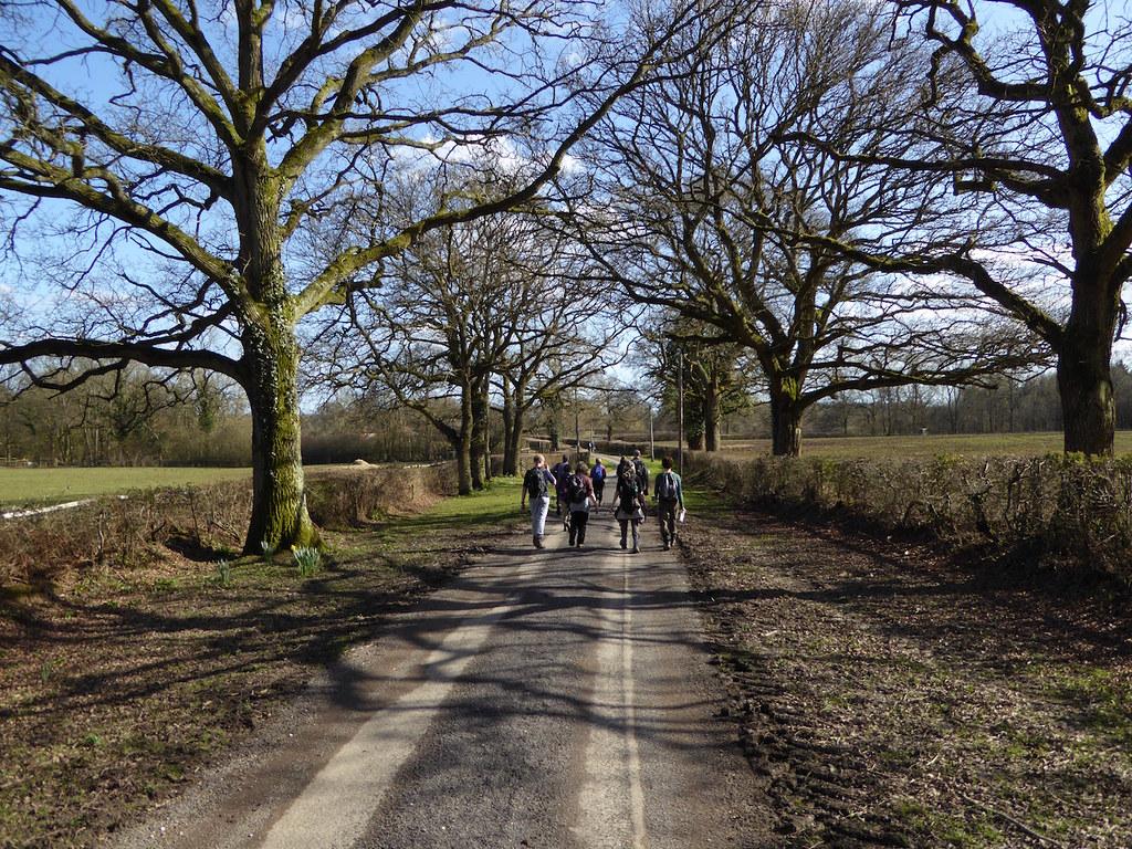 Walking down the lane Ockley to Warnham walk