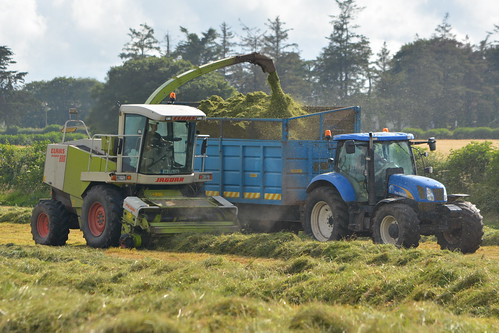 Claas Jaguar 880 SPFH filling a Dooley Silage Trailer drawn by a New Holland T6080 Tractor