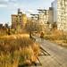 Web High Line golden light 14 by mtschappat@verizon.net