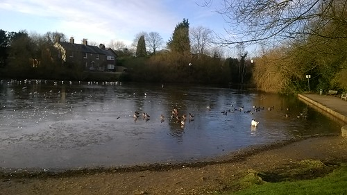 ICY POND FOR DUCKS _ OR DOGS!