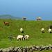 Escena de Las Azores. by Victoria.....a secas.
