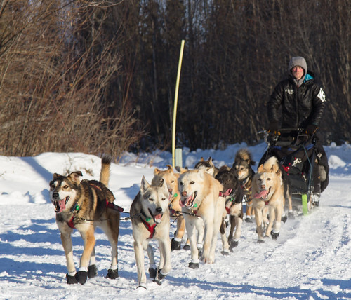 2016 Iditarod: Galena Friday