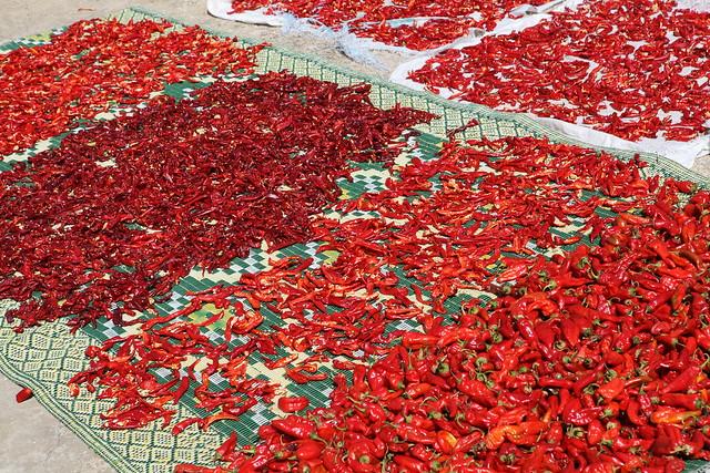Séchage Solaire des piments rouges destiné à la transformation, en provenance de plusieurs agriculteurs adhérents à une SMSA (By-ND-GIZ/Firas Khlifa)