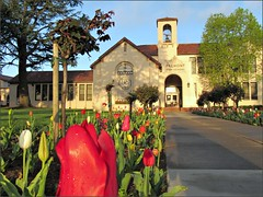 Tulips at Fremont High School