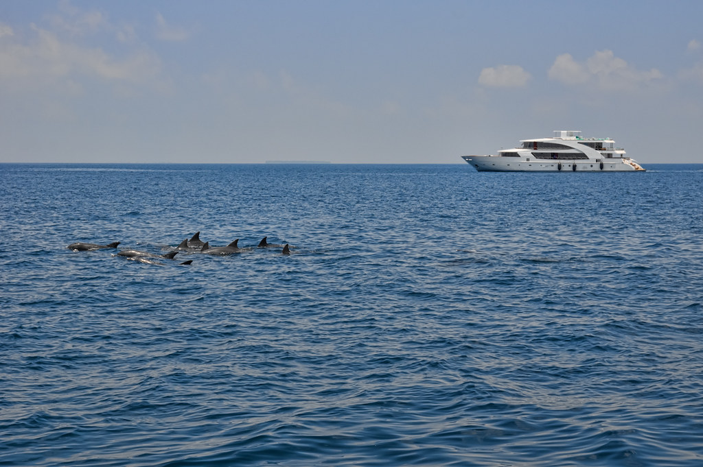 A pod of dolphins passes in front of Carpe Novo
