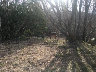 Deer just by Spence Field Shelter
