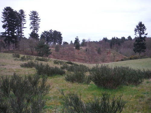 Maulden Wood from Greensand Ridge Walk