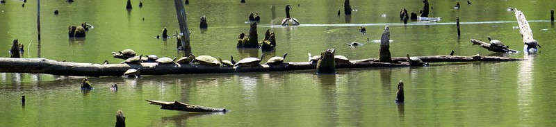 All the Turtles in the World