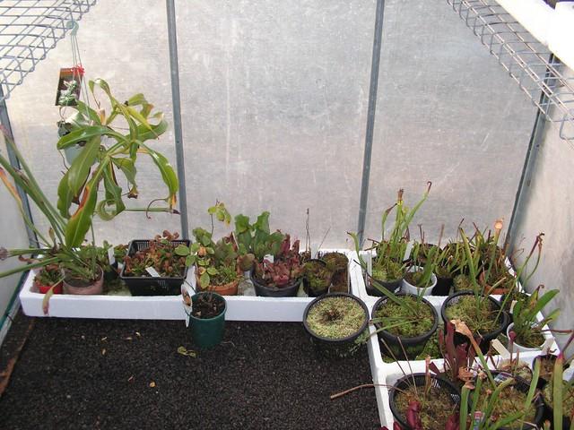 My first proper greenhouse - June 2009