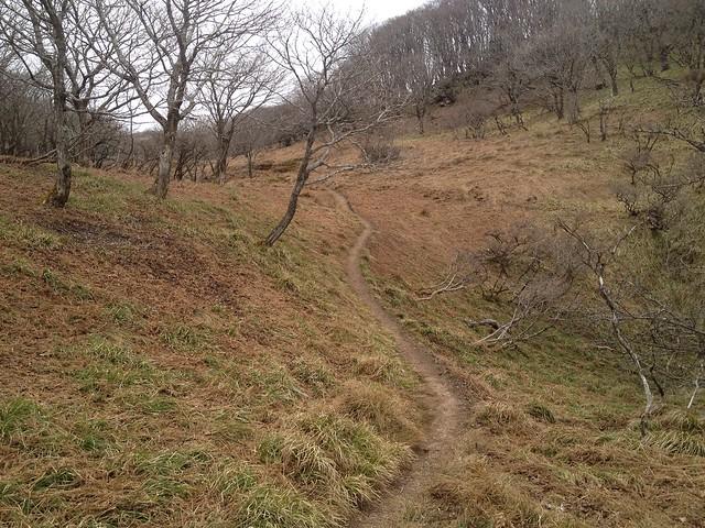 御池岳~鈴北岳 登山道