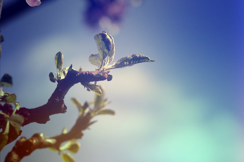 blur-dreamy-texture-texturepalace-21
