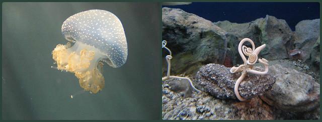 Genoa Aquarium