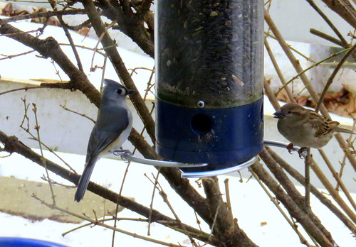 titmouse & sparrow