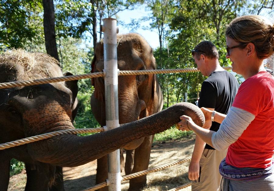 Tong-Bai Elephant Foundation