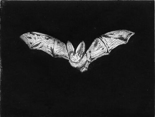 Twinkle Twinkle Little Bat