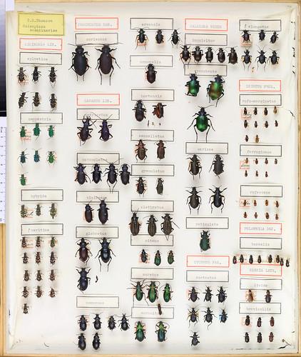 C.G. Thomson Coleoptera 2