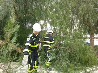 Rimozione di alberi e rami spezzati ad opera dell'Aserc (2)