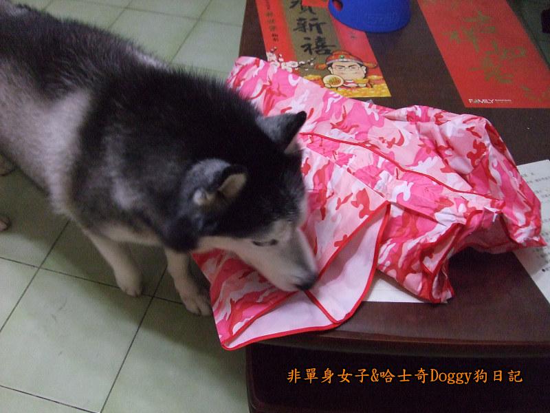 寵物雨衣迷彩服04