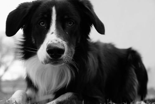 Untitled dog