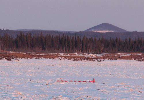 Iditarod: 2016 Galena Mid-Pack