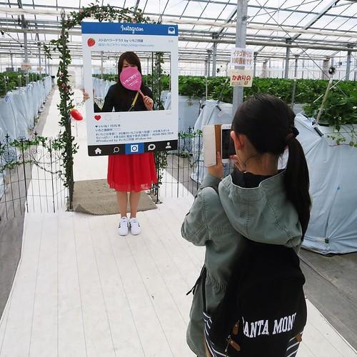 撮影の人 #越谷イチゴタウン