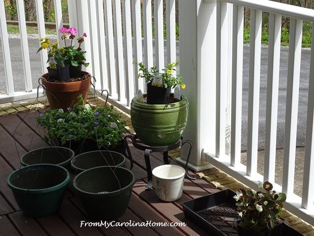 plants on the veranda