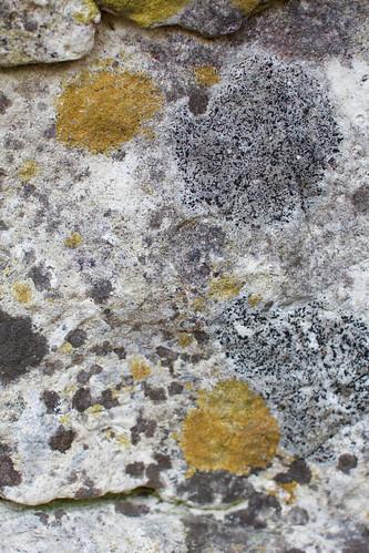 Multicolored Lichen at Meridian County Park