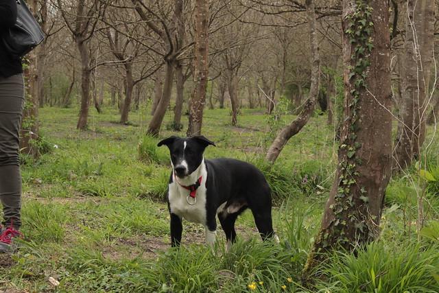 nos amis les chiens - Page 2 26187373476_979923d9d8_z